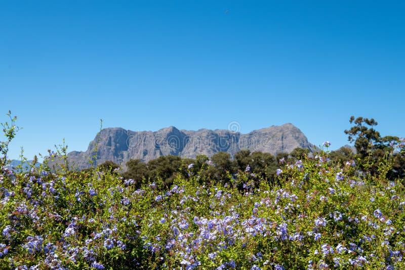 Weergeven van bloemen, groen en bergen uit Tokara-Wijnlandgoed worden genomen, Stellenbosch, Zuid-Afrika, op een duidelijke dag d royalty-vrije stock afbeeldingen