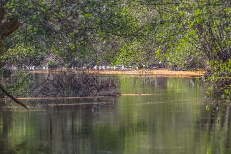 Weergeven van DÃo-rivier, met bomen, rotsen en vegetatie op de banken, bezinningen in het water en heldere kleuren stock foto's