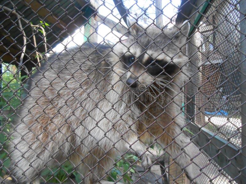 Weergeven van de dierentuin en weinig dier stock foto's