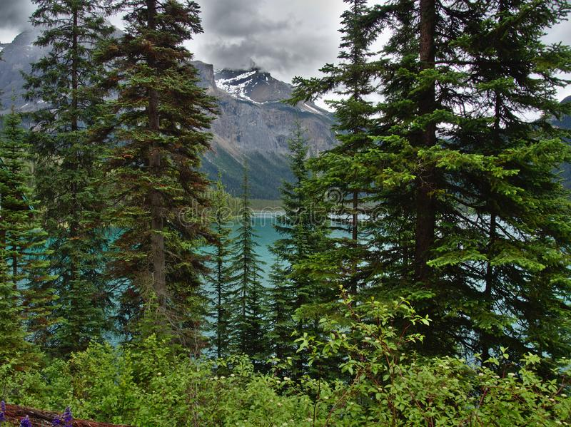 Weergeven van de Emerald Lake-wandelingssleep in Brits Colombia stock fotografie