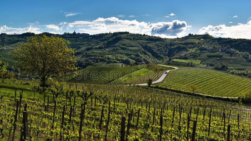 Weergeven van de heuvels en de wijngaarden van Langhe in het midden van een geasfalteerde die weg door een auto wordt gekruist stock afbeeldingen