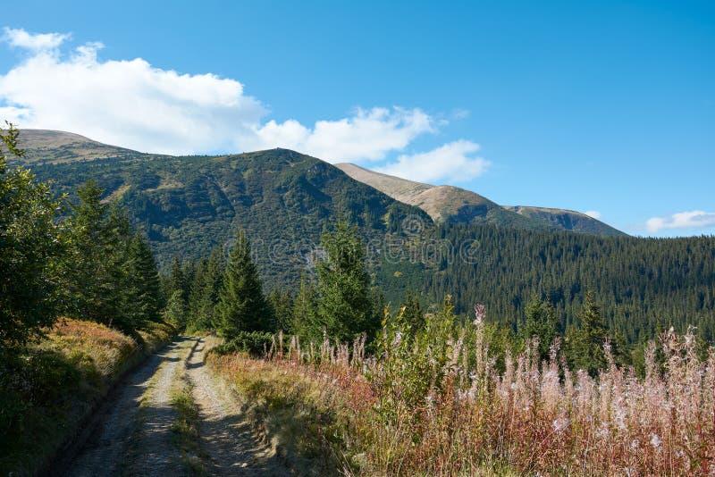 Weergeven van de Hoverla-berg, Karpatische Bergen, de Oekraïne, naaldbos Het landschap van de de herfstberg op een duidelijke, zo royalty-vrije stock foto's