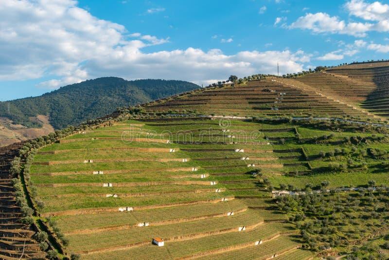 Weergeven van de mooie Torto-riviervallei met wijngaarden en terrasvormige hellingen in het Douro-Gebied, het beroemde Gebied van stock foto's