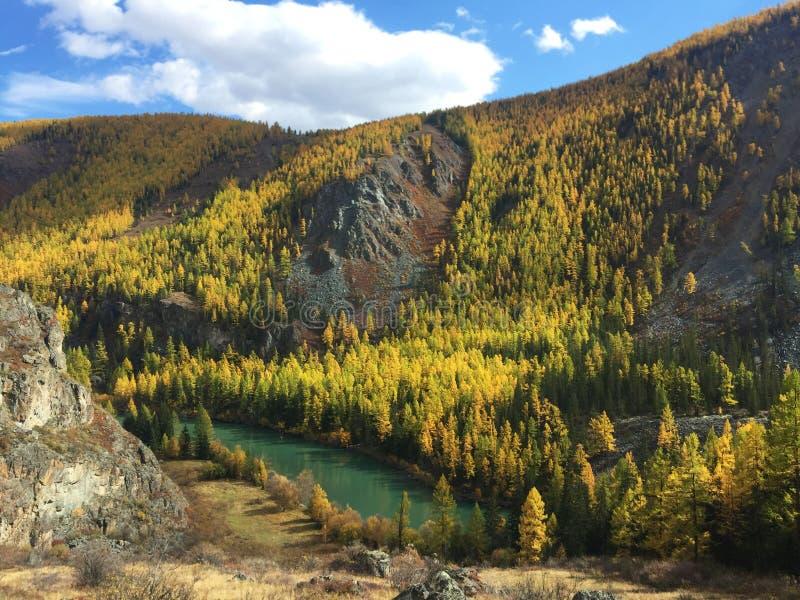 Weergeven van de vallei van de bergrivier Autumn Landscape De turkooise rivier van kleurenchuya De Bergen van Altai royalty-vrije stock afbeeldingen
