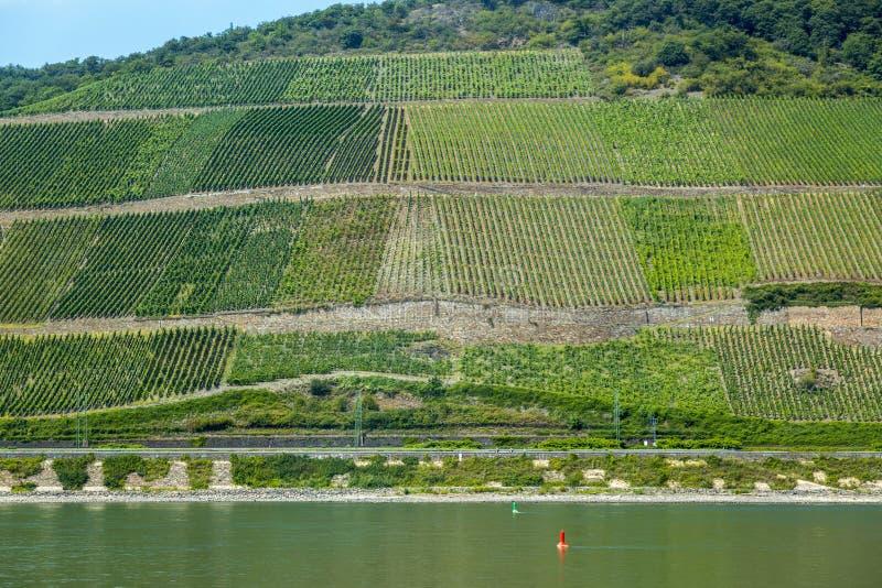Weergeven van de wijngaarden in de Rijn-Vallei in Duitsland stock afbeeldingen