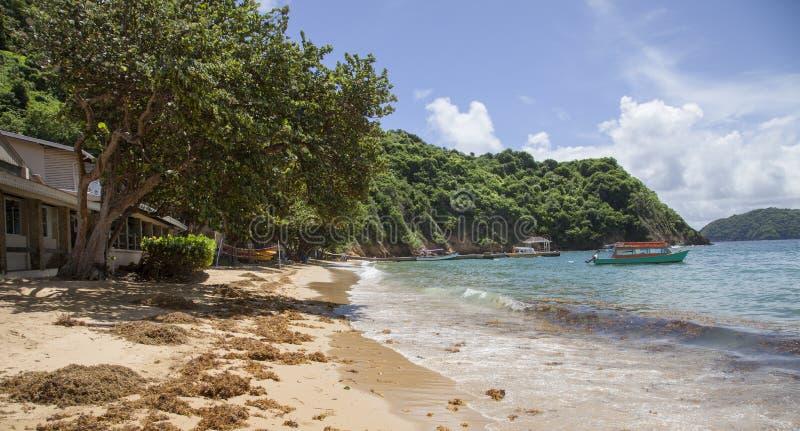 Weergeven van de zandige kust van het Caraïbische overzees met zeewierschepen Het Eiland Tobago subtropics royalty-vrije stock foto