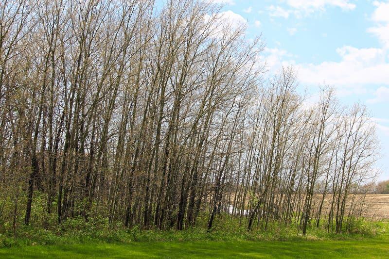 Weergeven van een bos gestript van zijn bladeren door rupsbanden royalty-vrije stock afbeeldingen
