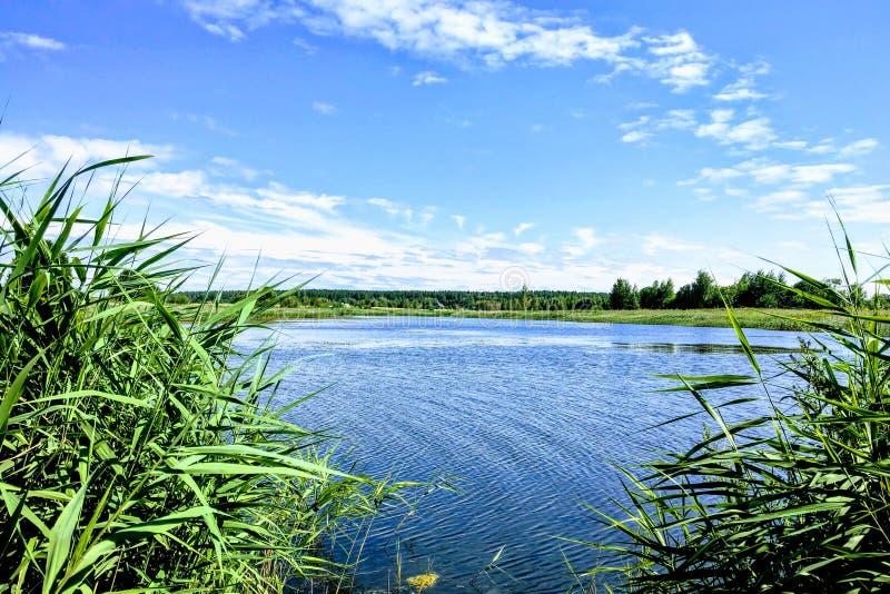 Weergeven van een schilderachtig meer met een mooie hemel op een duidelijke de zomerdag stock afbeeldingen