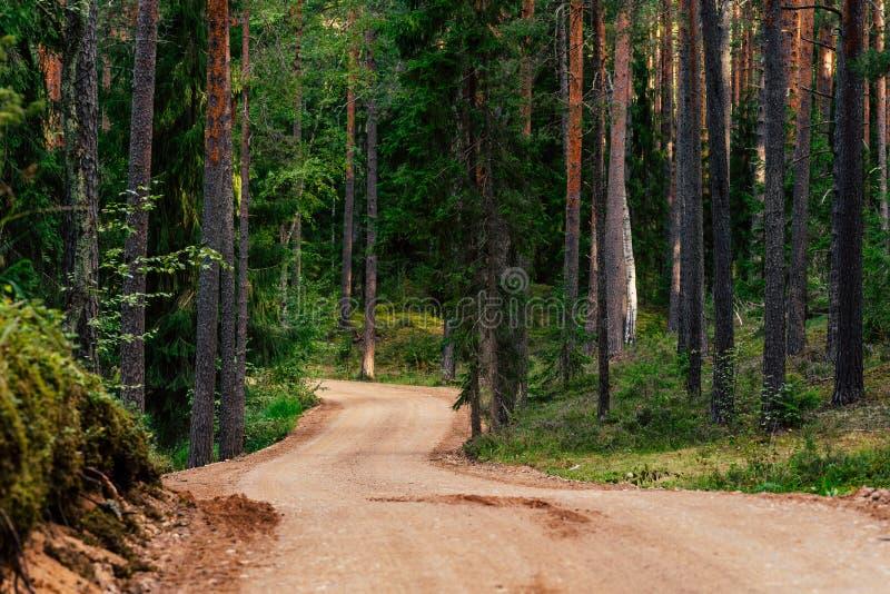 Weergeven van Forest Road, rubriek dieper in het Hout royalty-vrije stock foto