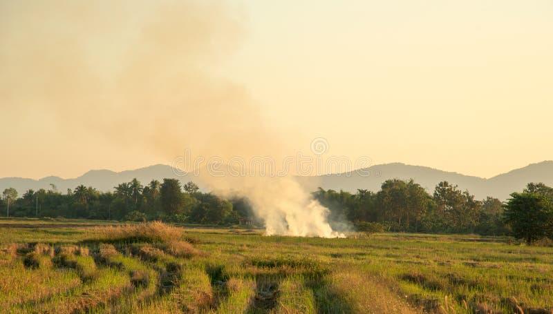 Weergeven van het Branden na de landbouw in padievelden stock afbeeldingen