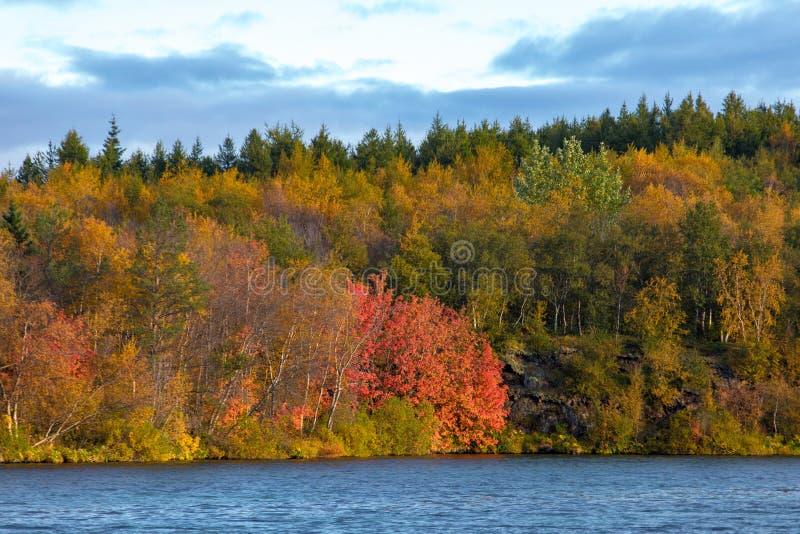 Weergeven van het de herfstbos en de oppervlakte van het meer Mooi de herfstlandschap met water en heldere vegetatie ijsland Euro stock afbeeldingen