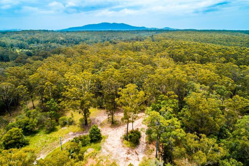 Weergeven van inheems Australisch eucalyptusbos royalty-vrije stock fotografie