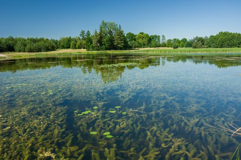 Weergeven van installaties onder water, bomen op de kust en de hemel stock fotografie