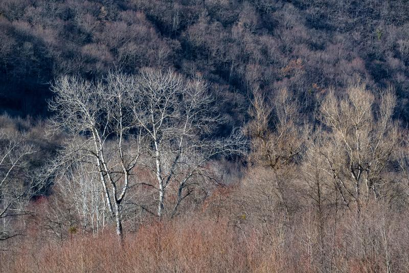 Weergeven van naakte bomen in bos in bergen stock foto's