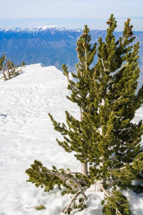 Weergeven van San Jacinto Peak naar de berg van San Gorgonio, San Bernardino National Forest, Californië stock foto