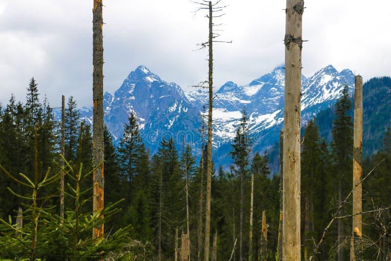 Weergeven van Tatra mounains Tatrabergen in de ochtend Mooie groene vallei bij sneeuwbergenuitlopers royalty-vrije stock afbeeldingen
