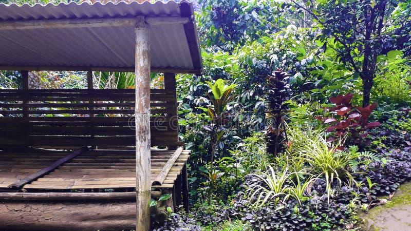 Weergeven van traditionele die huizen door Bamboe worden geconstrueerd royalty-vrije stock foto's