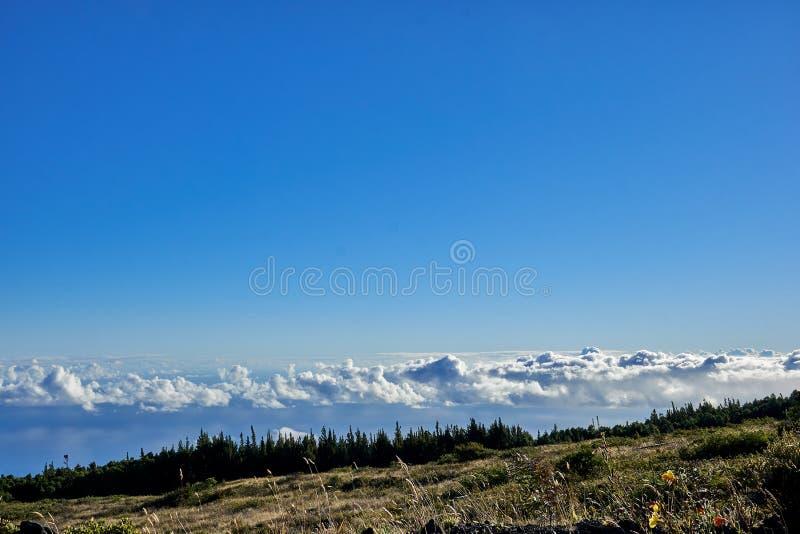 Weergeven van vegetatie, bomen, en wolken niet veel hoger van hen van de Haleakala-bergen in Hawaï, de V.S. stock foto