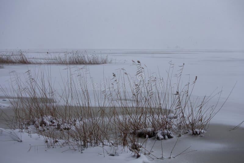 Weergeven van vers sneeuwtapijt over een kleine vijver in de heiden stock foto