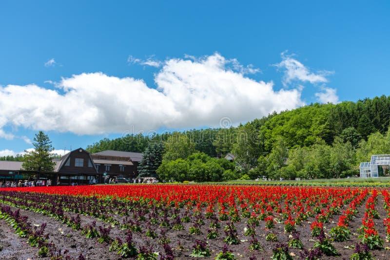 Weergeven van volledige bloei kleurrijk veelvoudig soort bloemen stock afbeelding