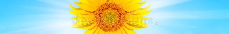 Weergeven van zonnebloem in zonnig weer royalty-vrije stock afbeelding