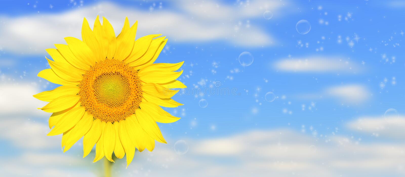 Weergeven van zonnebloem in zonnig weer royalty-vrije stock foto's