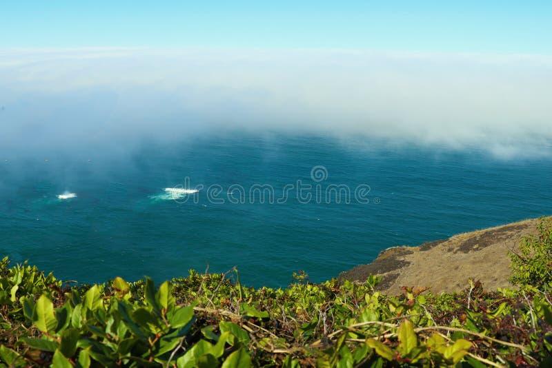 Weergeven vanaf de bovenkant aan het strand van de Vreedzame Oceaan op een mistige ochtend stock foto