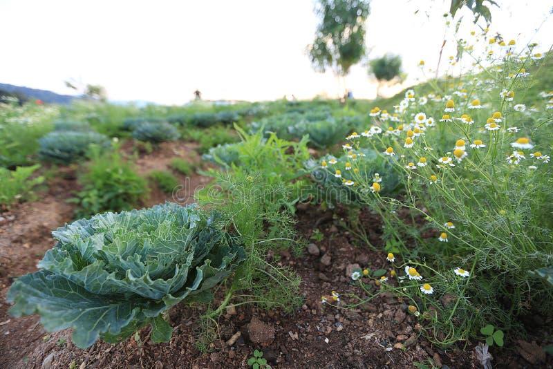 Weergevenscène van grasinstallatie en groenten op de berg in Chie stock afbeeldingen