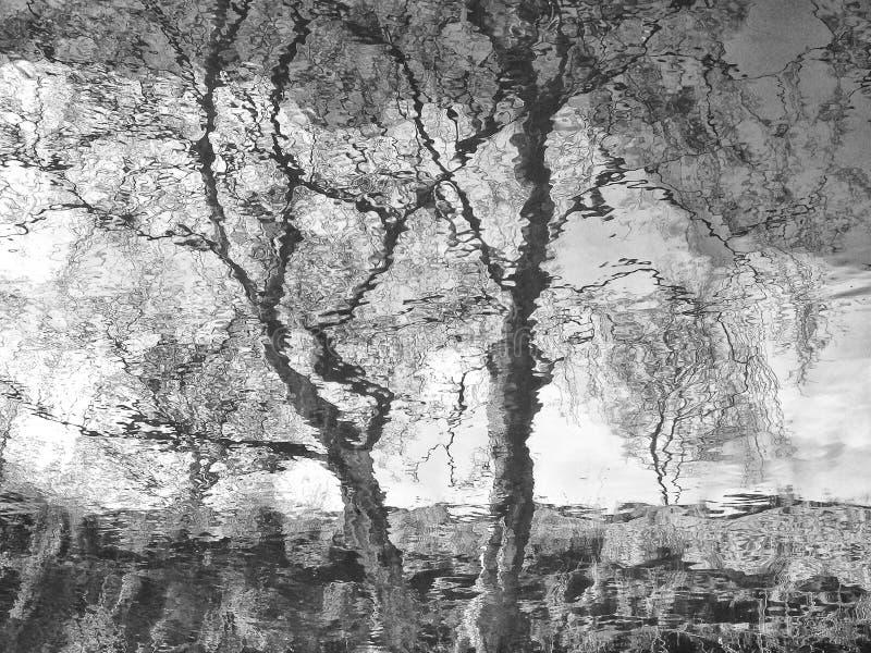 Weerspiegelde bomen in nog water stock fotografie