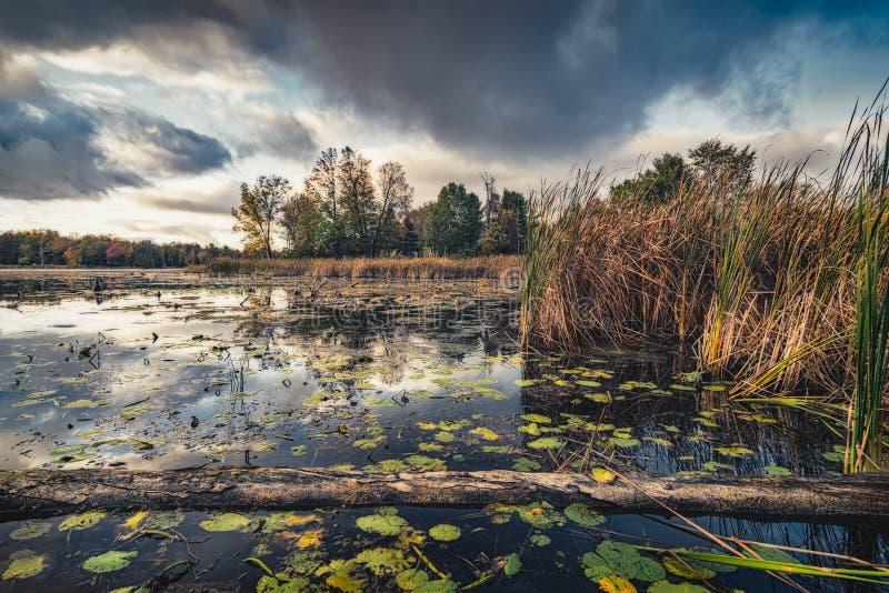 Weerspiegelde hemel in oorspronkelijk Clayton Lake royalty-vrije stock fotografie