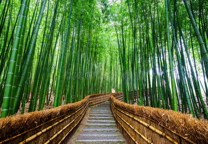 Weg aan bamboebos, Arashiyama, Kyoto, Japan stock afbeelding