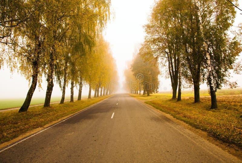 Weg aan een mist (de herfst) royalty-vrije stock afbeeldingen