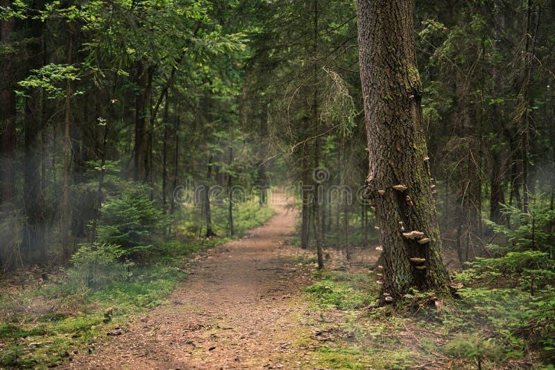 Weg aan het bos, Boomboomstam met paddestoelen stock fotografie