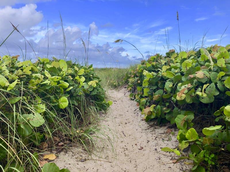 Weg aan het strand door de duinen stock foto's