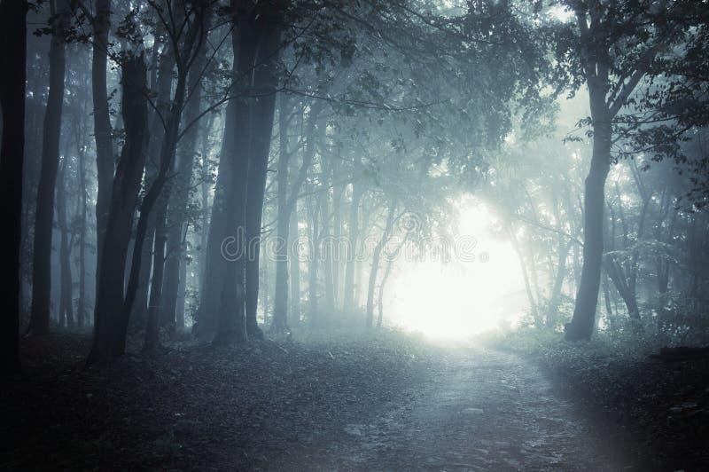 Weg aan licht door een donker bos bij nacht stock afbeeldingen
