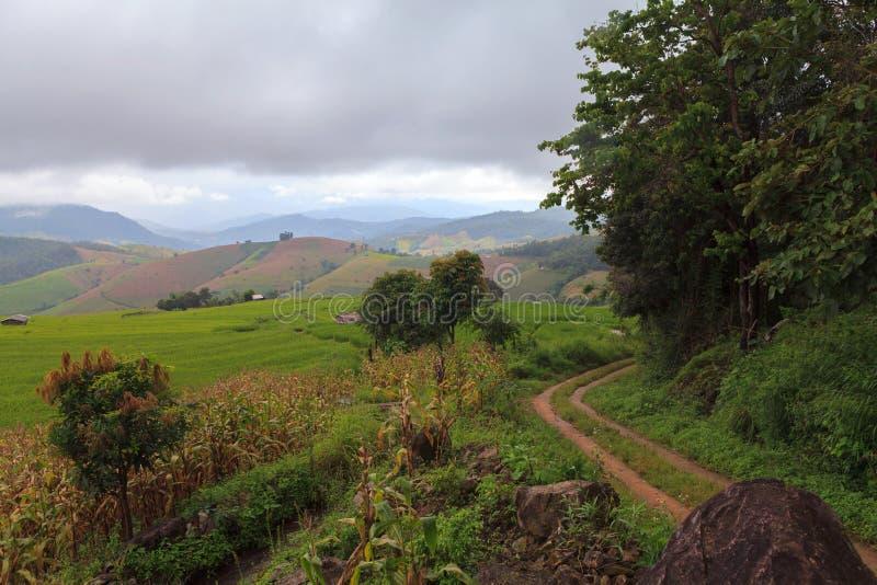 Weg aan moutains met groen terrasvormig padieveld in Chiangmai, Th stock fotografie