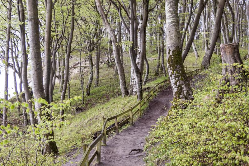 Weg aan witte klippen - Mon, Denemarken stock afbeelding