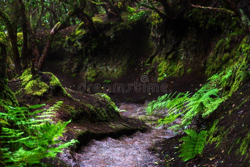 Weg in Anaga-Regenwoud op het eiland van Tenerife, Spanje stock fotografie