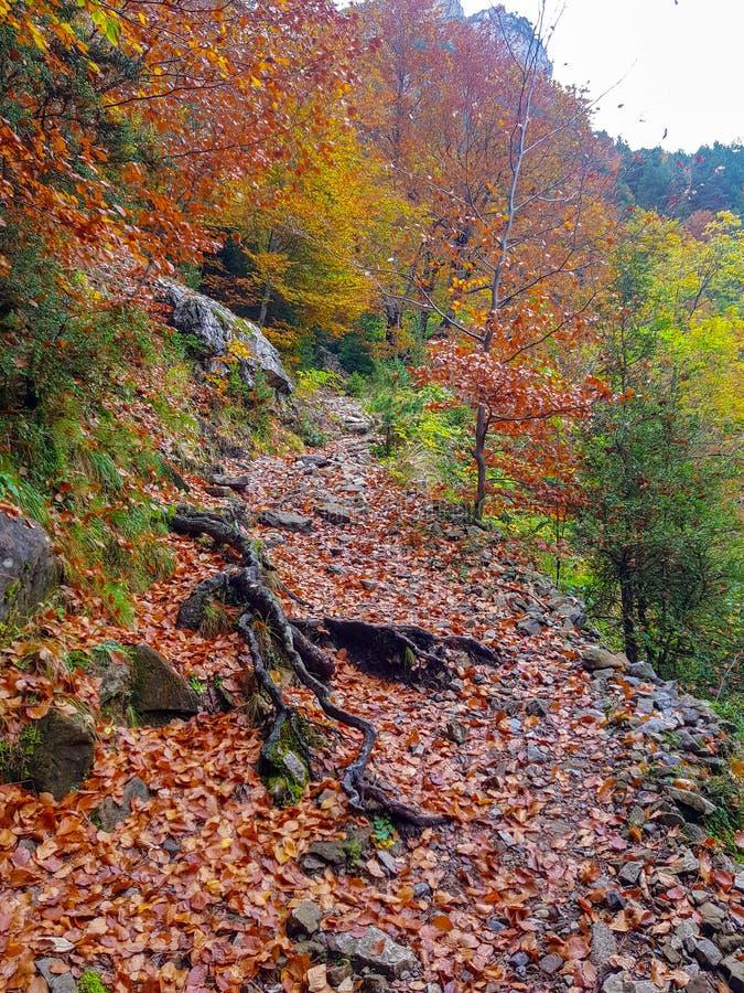 Weg auf dem Herbststraßenwald in Ordesa y Monte Perdido National Park, Huesca spanien stockbild