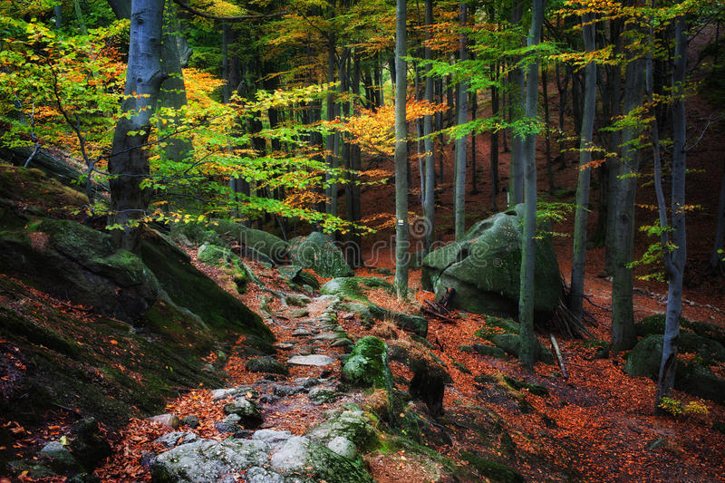 Weg in Autumn Forest Picturesque Scenery lizenzfreies stockfoto
