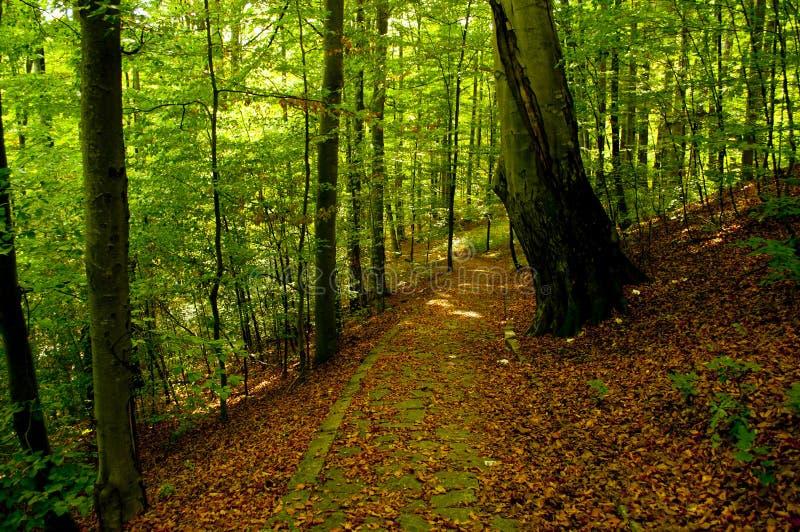 Download Weg in bos stock afbeelding. Afbeelding bestaande uit park - 29506051
