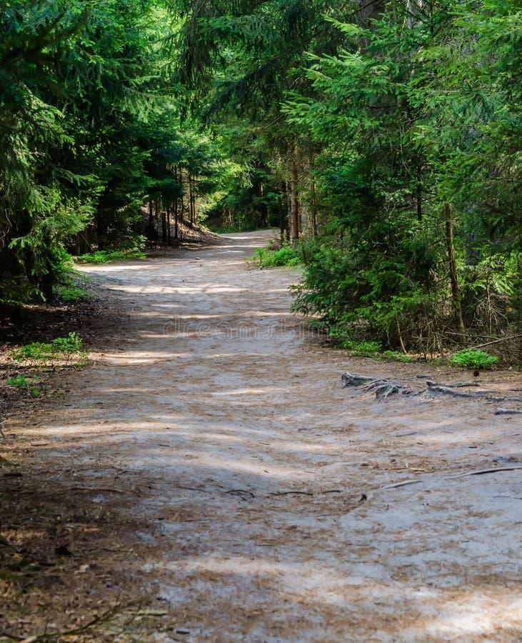 Weg in bos stock fotografie