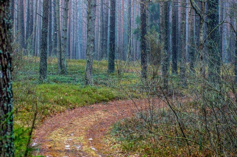 Weg in bos bij daling stock foto