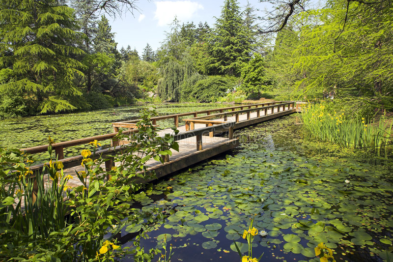 Weg in botanische tuin stock foto