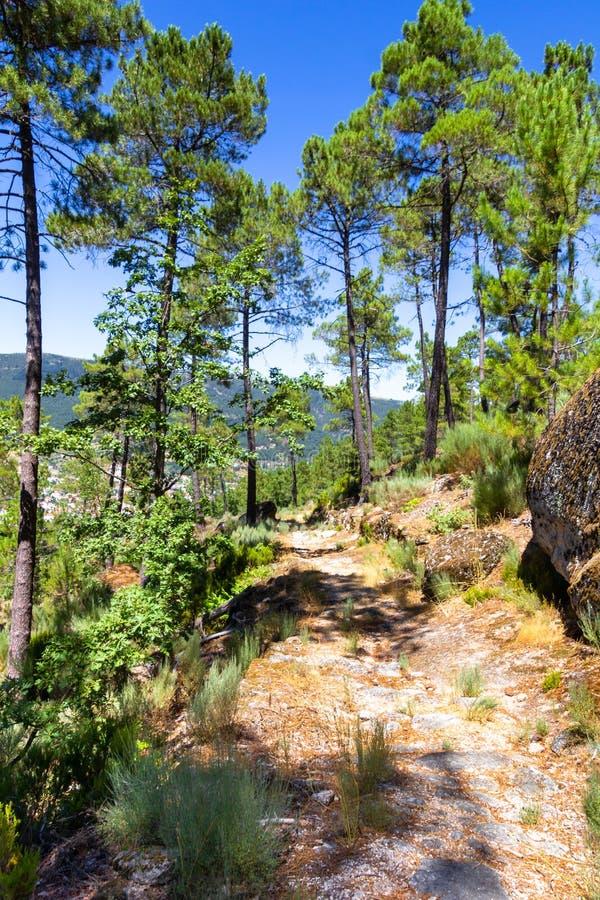 Weg in de bergen van Serra da Estrela, Portugal royalty-vrije stock foto's