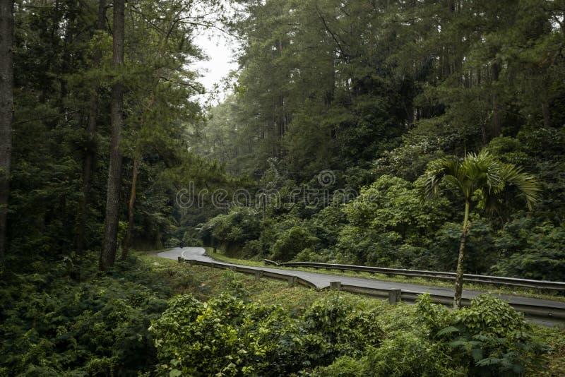 Weg in de bos, eenzame rust vibe stock afbeelding