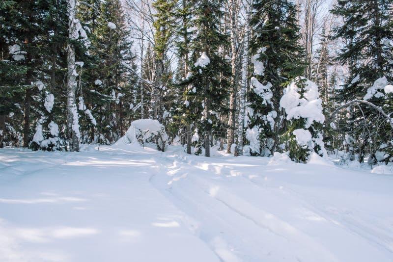 Weg in de bosbomen van de de winter boswinter in de sneeuw dichtbij de weg De bomen van de winterforest christmas in de sneeuw stock afbeelding