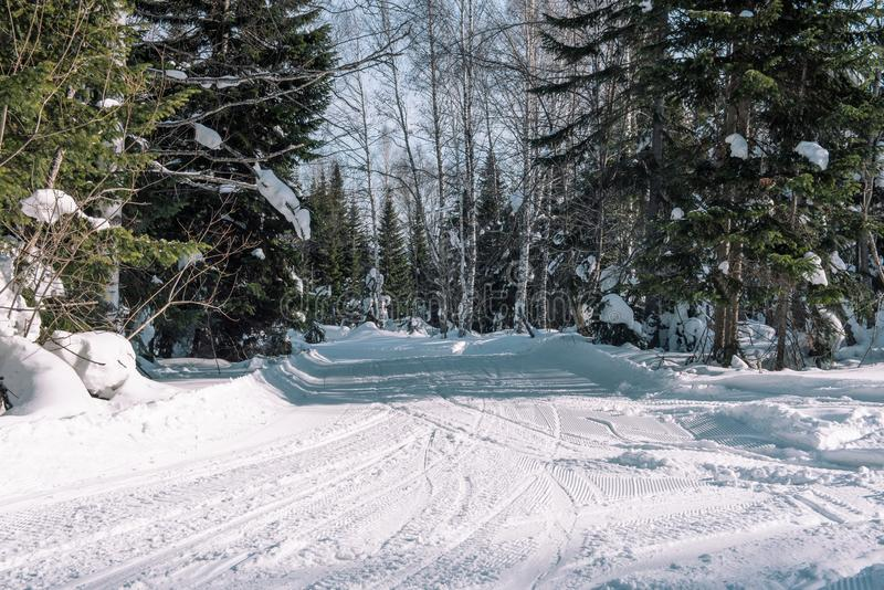 Weg in de bosbomen van de de winter boswinter in de sneeuw dichtbij de weg De bomen van de winterforest christmas in de sneeuw royalty-vrije stock foto's