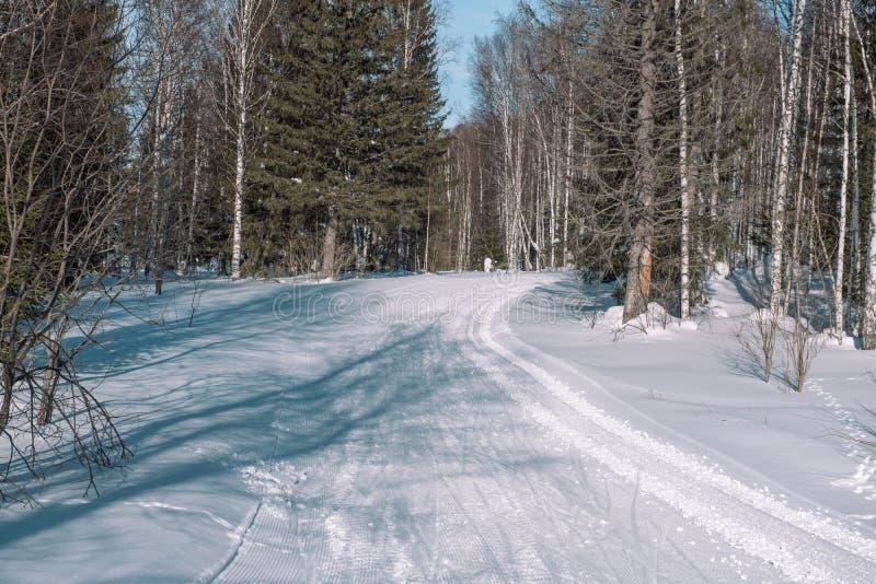 Weg in de bosbomen van de de winter boswinter in de sneeuw dichtbij de weg De bomen van de winterforest christmas in de sneeuw stock fotografie