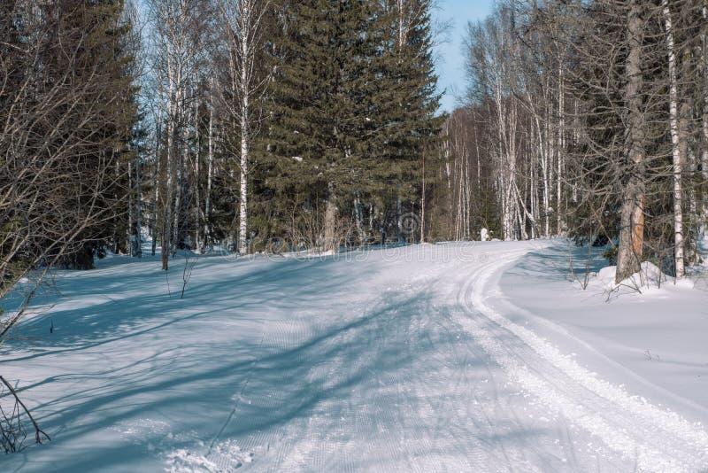 Weg in de bosbomen van de de winter boswinter in de sneeuw dichtbij de weg De bomen van de winterforest christmas in de sneeuw stock foto